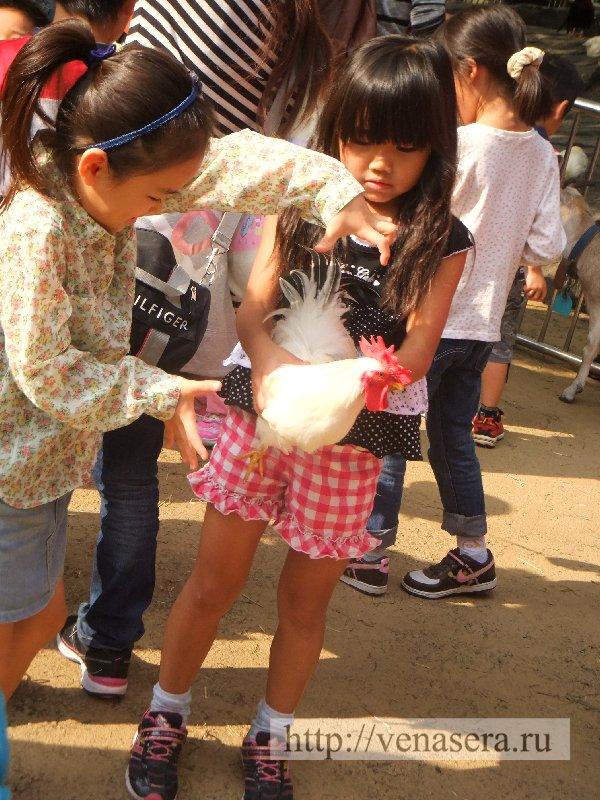 Есть специальная площадка с мелкими животными, чтобы дети с ними игрались.