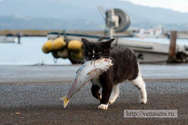 Остров япония коты
